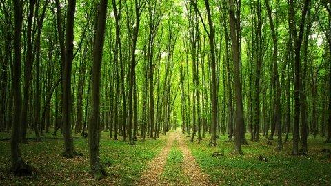 Bois et forêts à découvrir